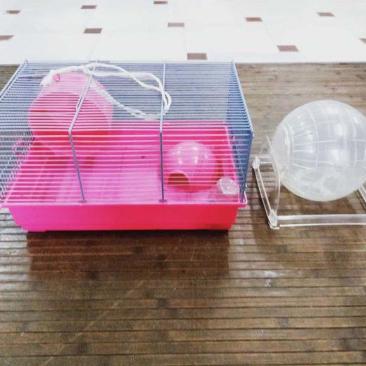 Jaula para roedores+Bola de ejercicio